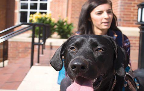 Emotional-support animals provide comfort, friendship