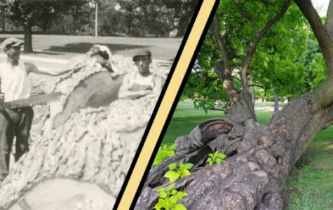 Lindenwood Then and Now: rooted in history