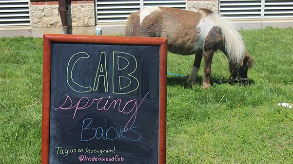 CAB's Spring Babies petting zoo had animals ranging from kittens to goats for students to pet.  Photo by Lindsey Fiala